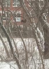 Lidzia poza Stołówki dla Ptaków, regularnie orzechami dokarmia wiewiórkę